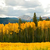 Colorado Fall Foliage 013   Wall Art Resource