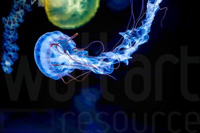 Glowing Jellyfish 033 | Wall Art Resource
