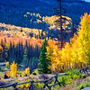 Colorado Fall Foliage 035 | Wall Art Resource