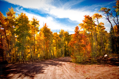 Colorado Fall Foliage 037 | Wall Art Resource