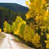 Colorado Fall Foliage 010   Wall Art Resource
