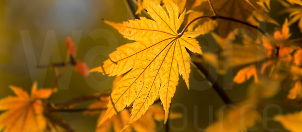 Colorado Fall Foliage 024 | Wall Art Resource