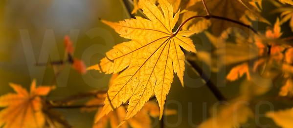 Colorado Fall Foliage 024 | Wall Art Resource