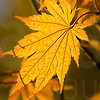 Colorado Fall Foliage 024   Wall Art Resource