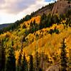 Colorado Fall Foliage 007   Wall Art Resource