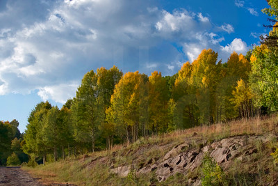 Colorado Fall Foliage 003 | Wall Art Resource