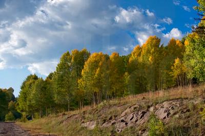 Colorado Fall Foliage 003 | Wall Art Resource