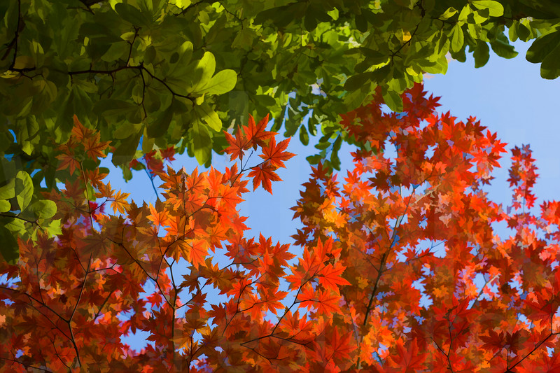 Colorado Fall Foliage 023 | Wall Art Resource