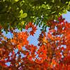 Colorado Fall Foliage 023 | Wall Art Resource