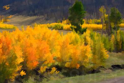 Colorado Fall Foliage 020 | Wall Art Resource