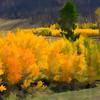 Colorado Fall Foliage 020   Wall Art Resource