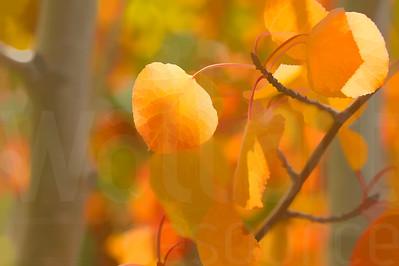 Colorado Fall Foliage 019 | Wall Art Resource