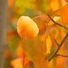 Colorado Fall Foliage 019   Wall Art Resource