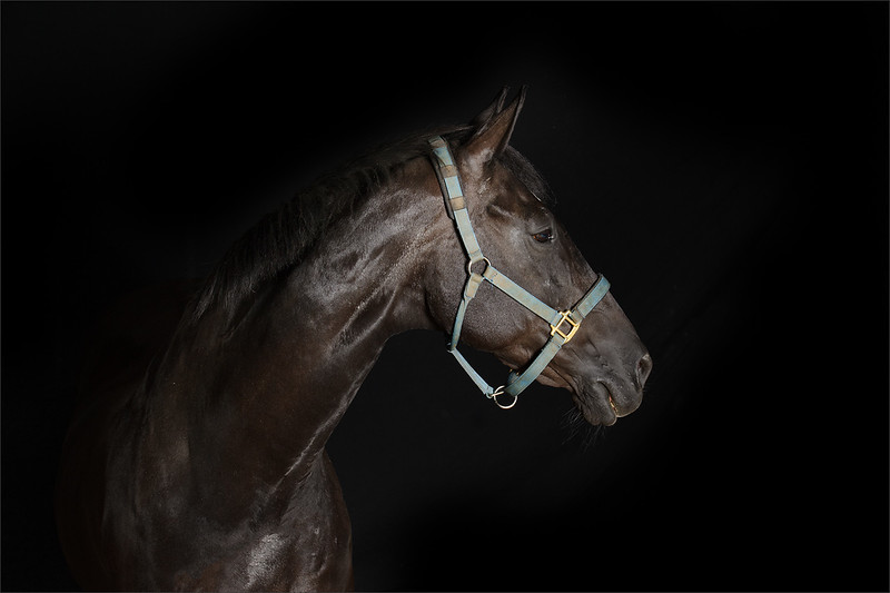 Fine art equine portraiture