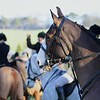 Buccleuch Hunt Meet - Boxing Day 2013 721