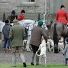 Buccleuch Hunt Meet - Floors - 13-12-23 501