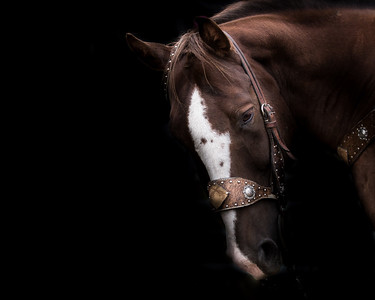 Horse photography