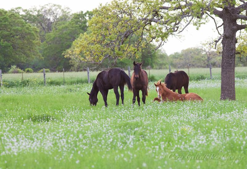 Quarter Horse Celebrates Spring