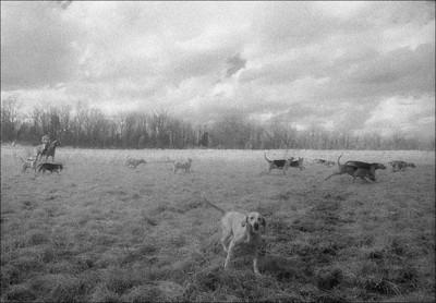 Painterly Hunt field