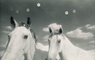 2 Horses 6 Moons