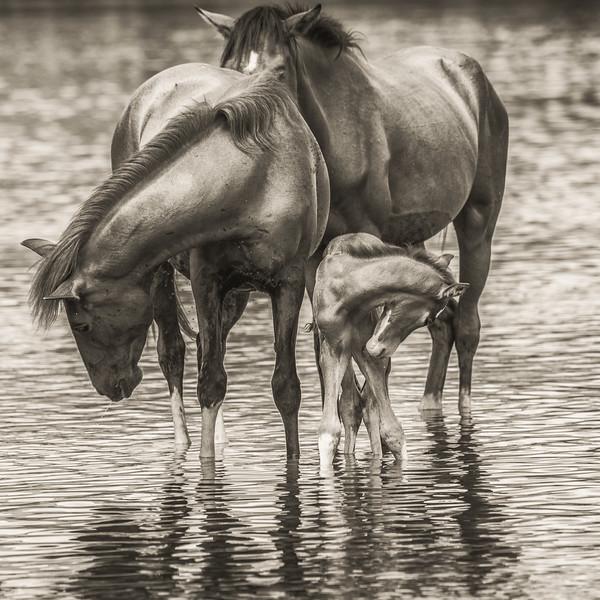 'A Mother's Love', Salt River Wild Horses, Salt River, just outside of Phoenix, AZ