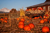 Longs Peak Pumpkin Patch