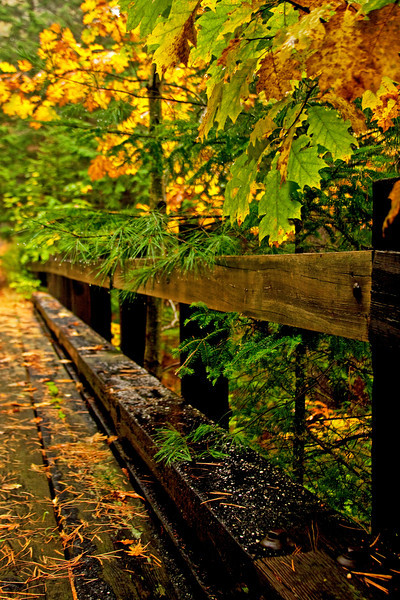 Autumn Bridge 2