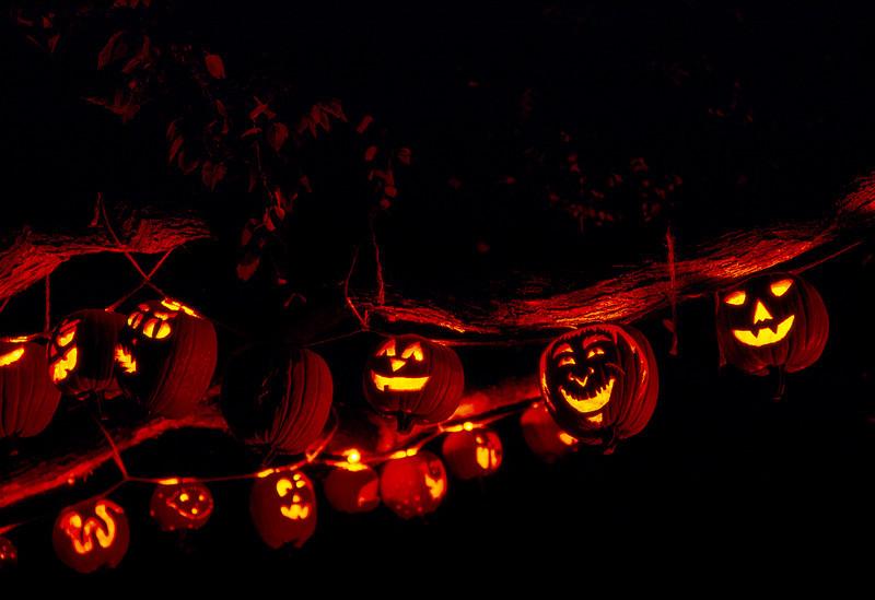 Pumpkins in Tree