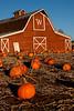 Pumpkin Barn