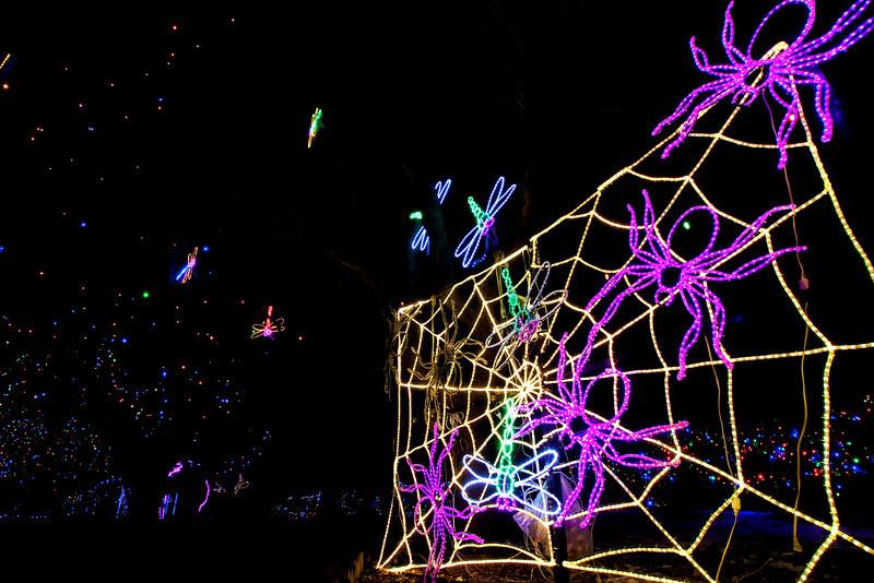 Winter Lights Web