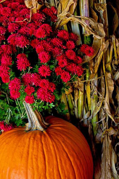 Autumn Greetings