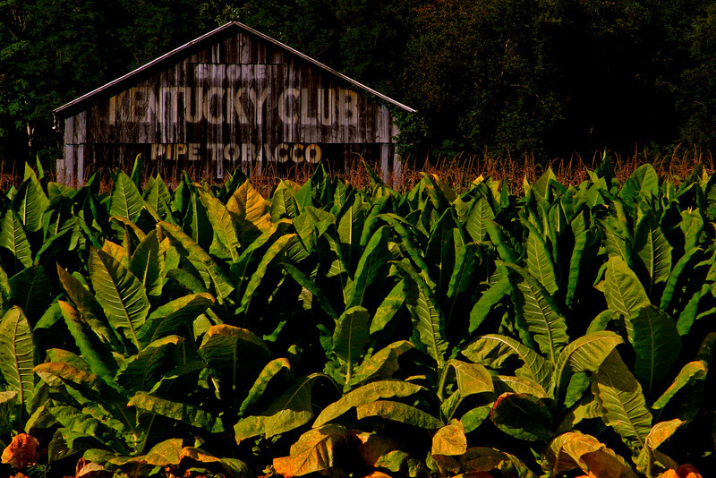 Kentucky Club Tobacco