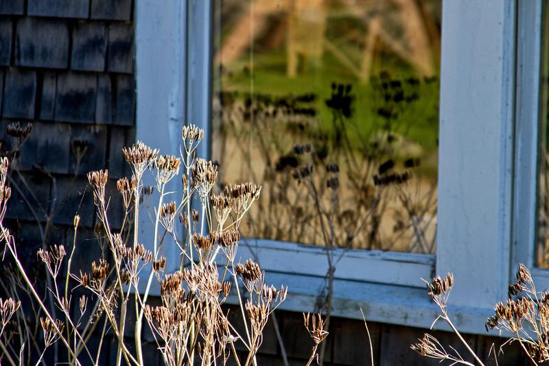 Monhegan Window