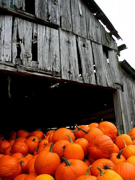 Pumpkins & Barn