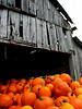 Pumpkins & Barn
