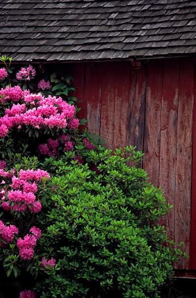 Barn & Flowers