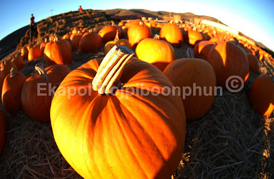 Orange Planet  Personally I believe that US of A is the nation that has the most pumpkins in the world. Yes, they are like everywhere in October.  copyright © 2007 Ekapol Rojpiboonphun