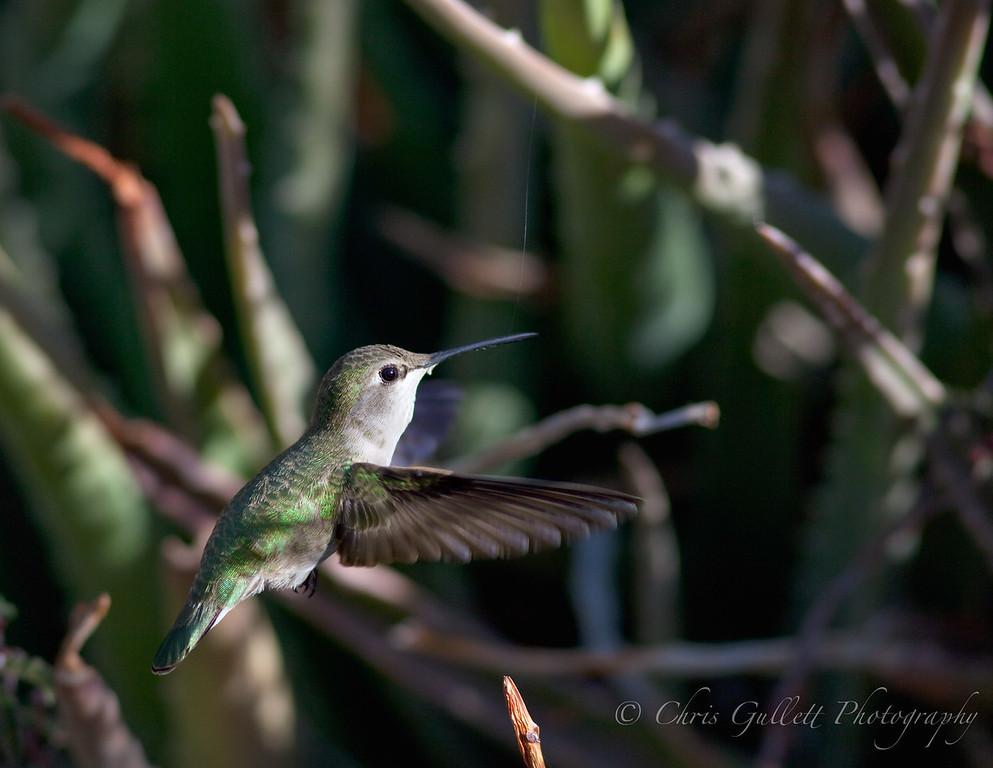 Hummingbird Treasures