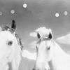 Two Horses - Six Moons