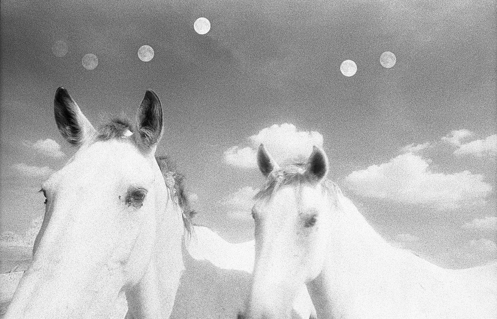 Two Horses - Six Moons