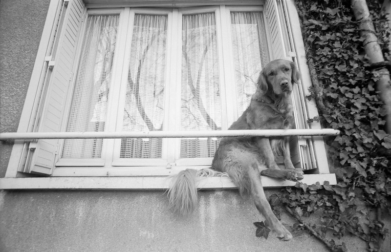 Chartres Dog