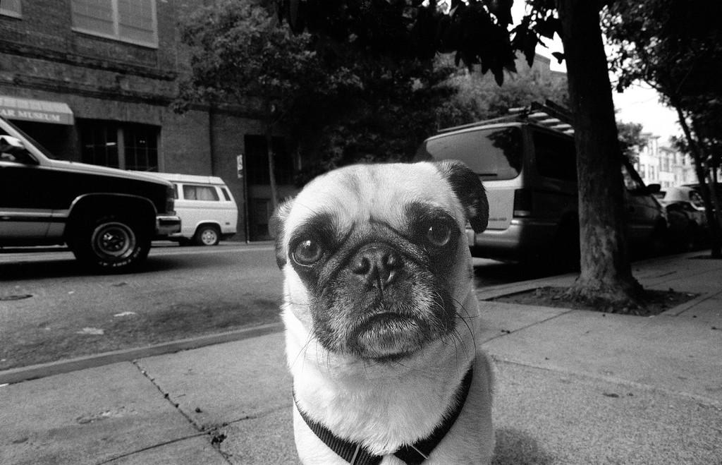A Man Faced Dog