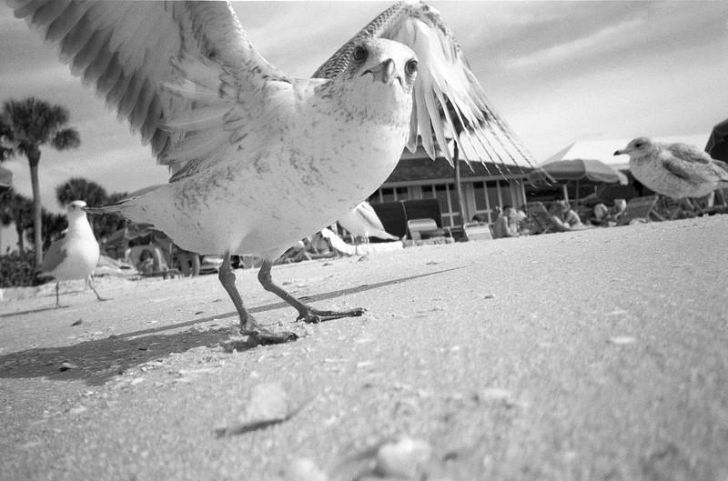 Naples Bird