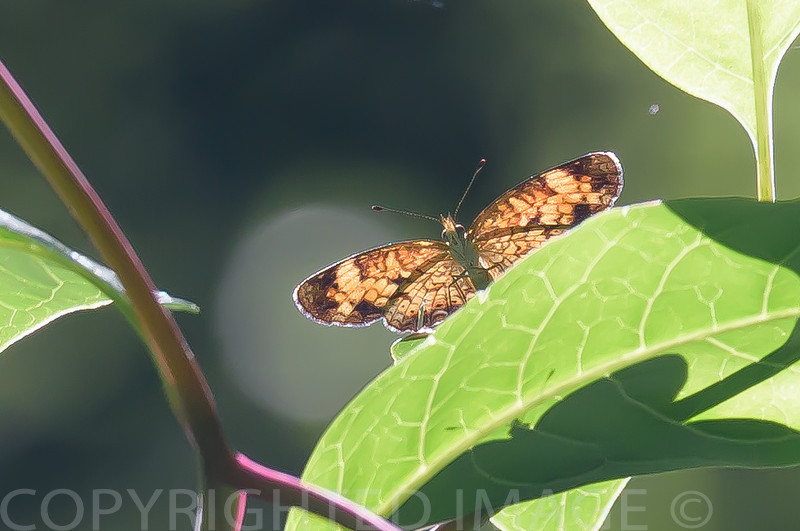 Resting in the Sunlight ~ Huron River and Watershed