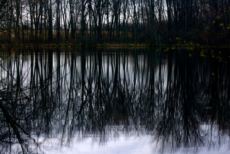 tree reflections ~ Lake  Isabelle, Brauer Preserve, Michigan
