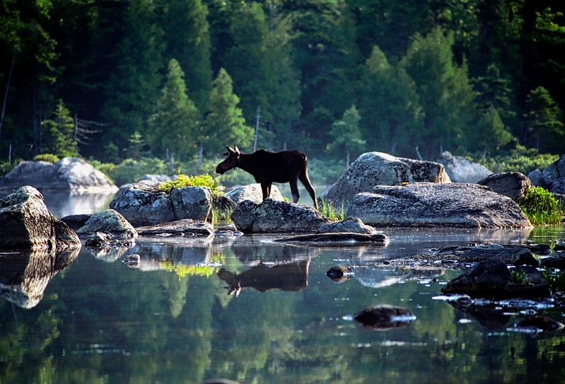 Maine - 1999