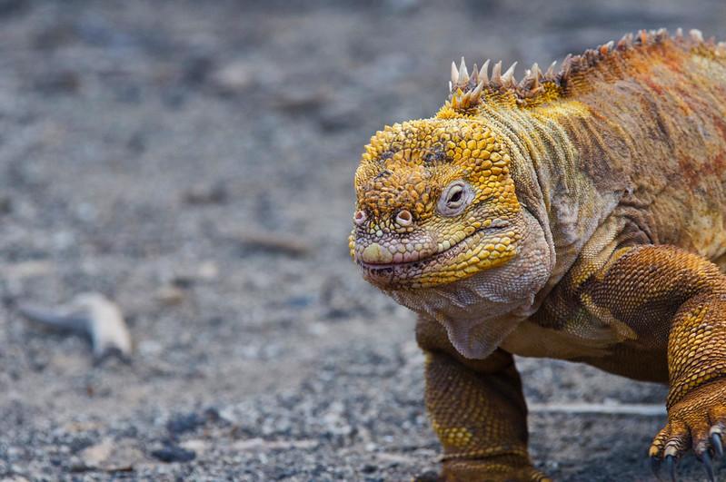 Galapagos - 2016