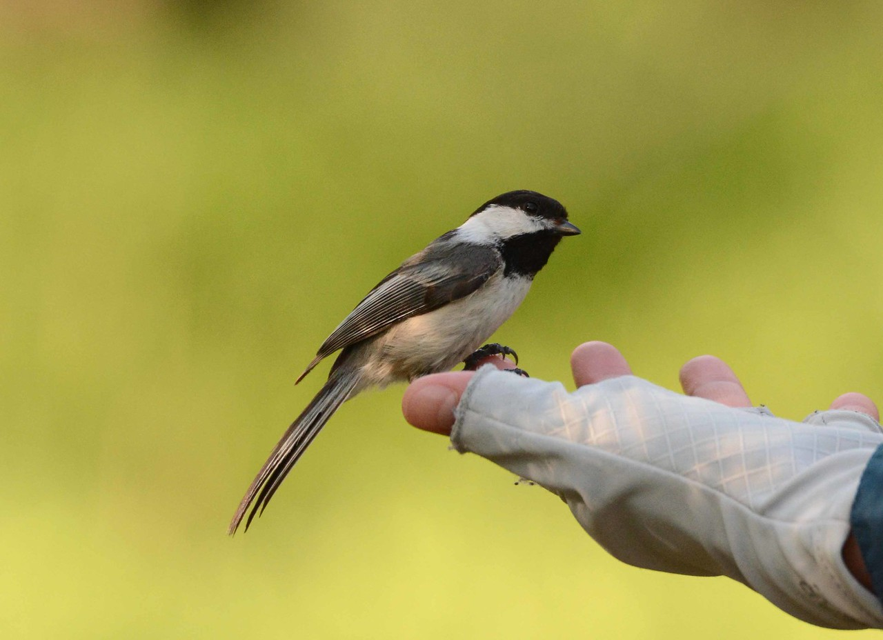"A bird in the hand is worth a sunflower seed or two. <br /> <br /> 'He said that when we hold a bird what is in our hands is not the bird any more and that when we look at birds we see only a little of them' ~ from ""The Folding Cliffs"" by William Stanley Merwin, 1998."