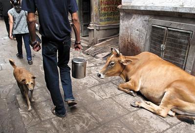 Varanasi | India