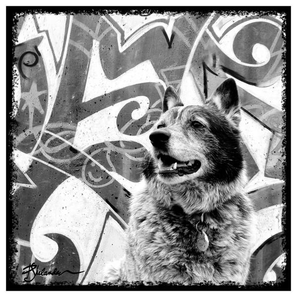 Phoebe Graffiti